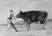 Mas Oyama fighting a bull